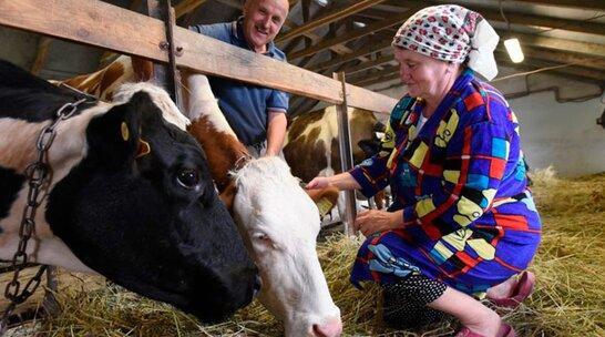 Невеликі сімейні ферми отримають субсидію 5 тис. грн на гектар – рішення Кабміну