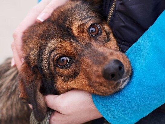 Безпритульні тварини: у Львові волонтери облаштовують будиночки для собак (відео)