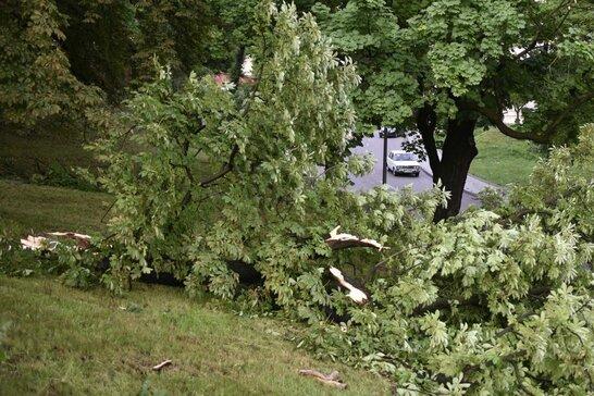 Негода у Львові: внаслідок грози та зливи у місті виявили 27 повалених дерев (відео)