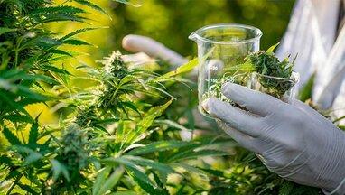 Уряд України легалізував окремі медичні препарати на основі марихуани