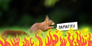 Через зміну клімату Україна може втратити 97% ареалу вивірки