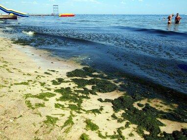 """Вода зеленого кольору: біля берегів Одеси """"цвіте"""" Чорне море (відео)"""