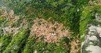Шар сягає 15-ти сантиметрів: на Одещині тисячі мертвих креветок викинуло на берег (фото)