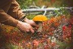 Пішли в ліс та загубились: на Прикарпатті знайшли тіла двох грибників (відео)
